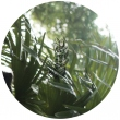 Botanic House (Vol. II) - Monstera Deliciosa E.P.